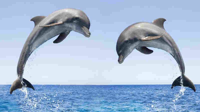 Bottlenose Dolphins Spotted Off Canada's Pacific Coast For The First Time