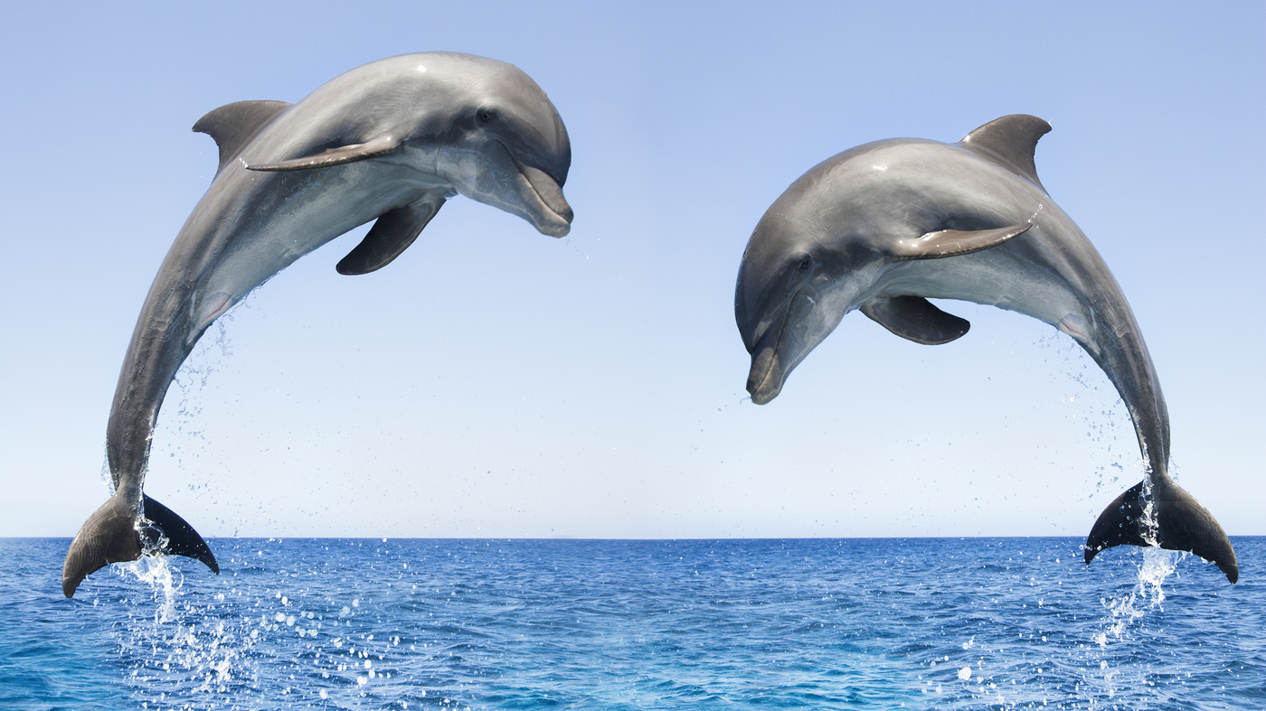 Bottlenose Dolphins Spotted Off Canada