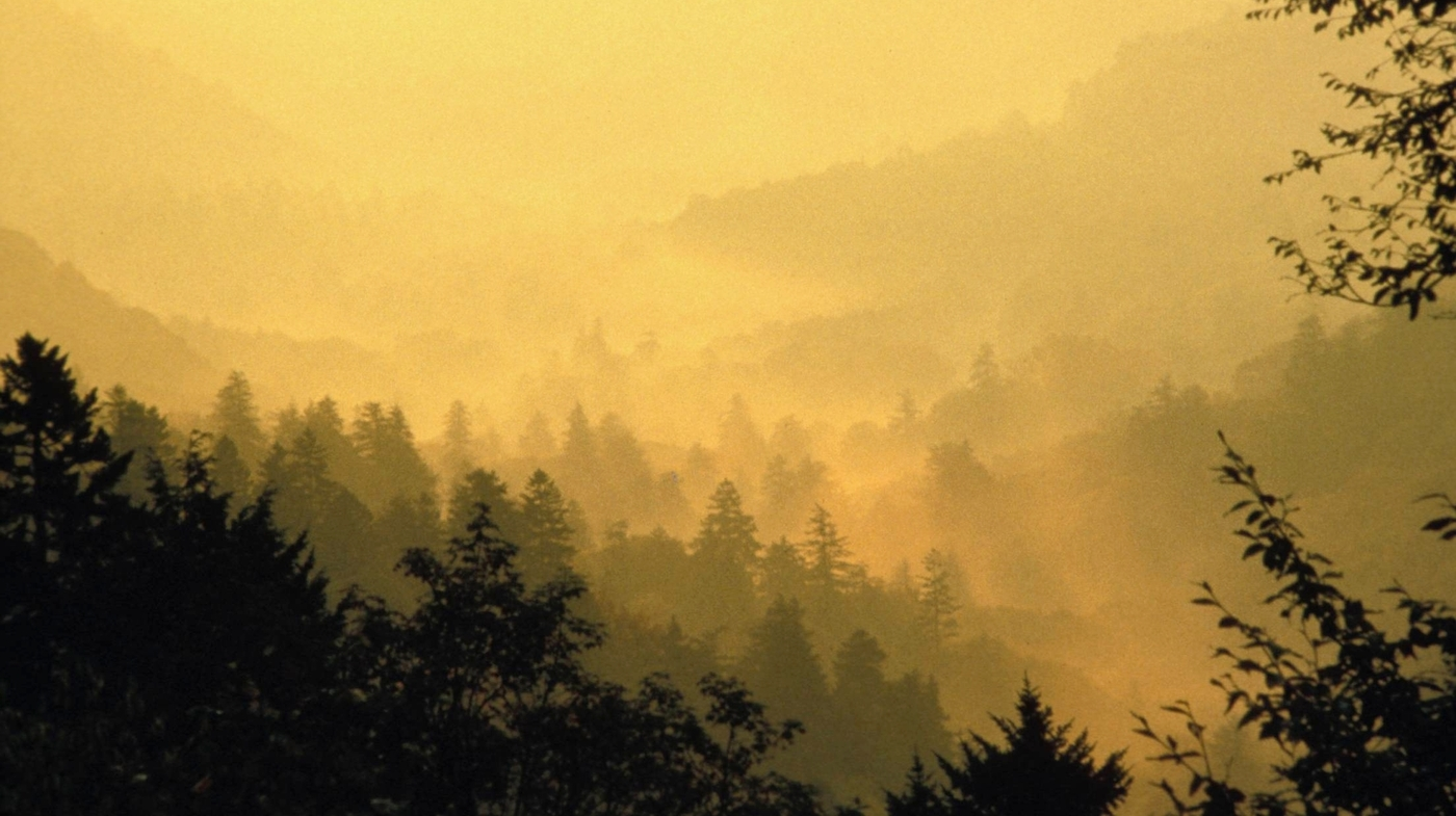 Novelist Richard Powers Finds New Stories Deep In Old Growth Forests Npr