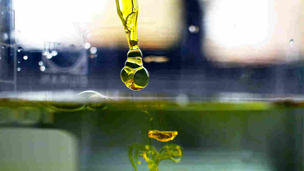 Anxiety Relief Without The High? New Studies On CBD, A Cannabis Extract
