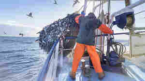 For 50 Years, Deep-Water Trawls Likely Caught More Fish Than Anyone Thought