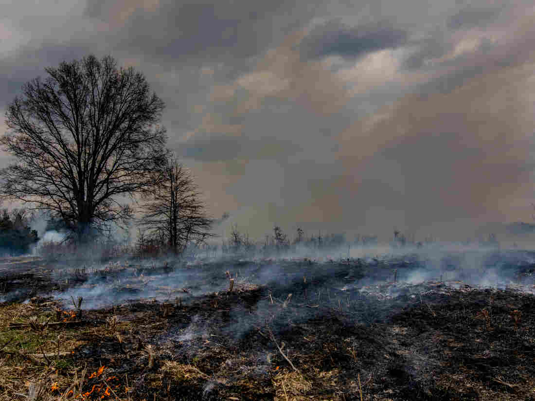 National Park Service firefighters methodically ignited approximately 60 acres of meadow and brush in the Brawner Farm area of the Manassas National Battlefield Park.