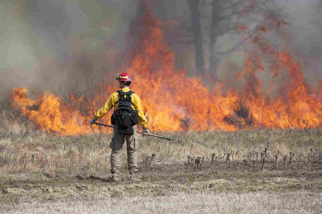 A controlled burn at Manassas National Battlefield in Virginia.