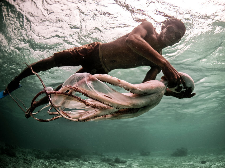 Jatmin carries a freshly-speared octopus back to his boat. (James Morgan)
