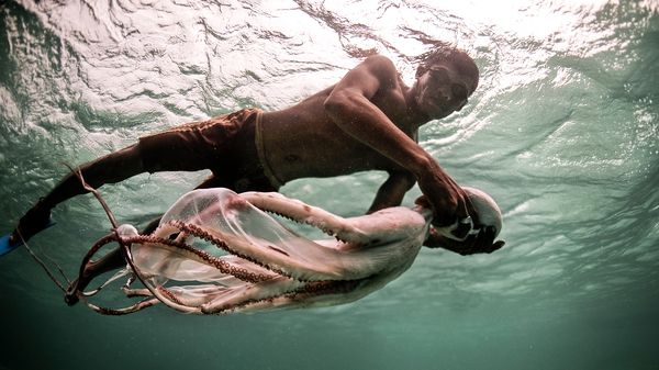 Jatmin carries a freshly-speared octopus back to his boat.