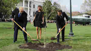 Macron's Gift Tree Gone From White House Lawn. Ambassador Says It's In Quarantine