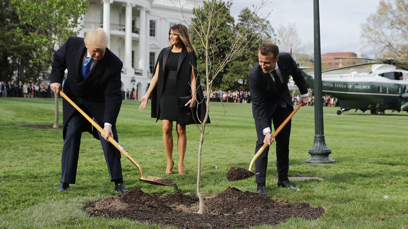 Macrons gift tree gone from white house lawn ambassador says its macrons gift tree gone from white house lawn ambassador says its in quarantine negle Choice Image