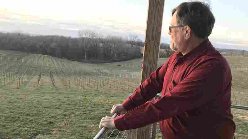 Midwestern Vintner Saves The Forgotten Grapes That Saved Europe's Wines