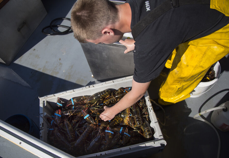 Warming Waters Push Fish To Cooler Climes, Out Of Some Fishermenu0027s Reach
