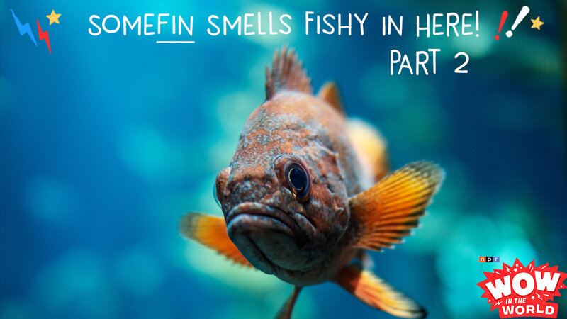 Somefin Smells Fishy In Here How Fish