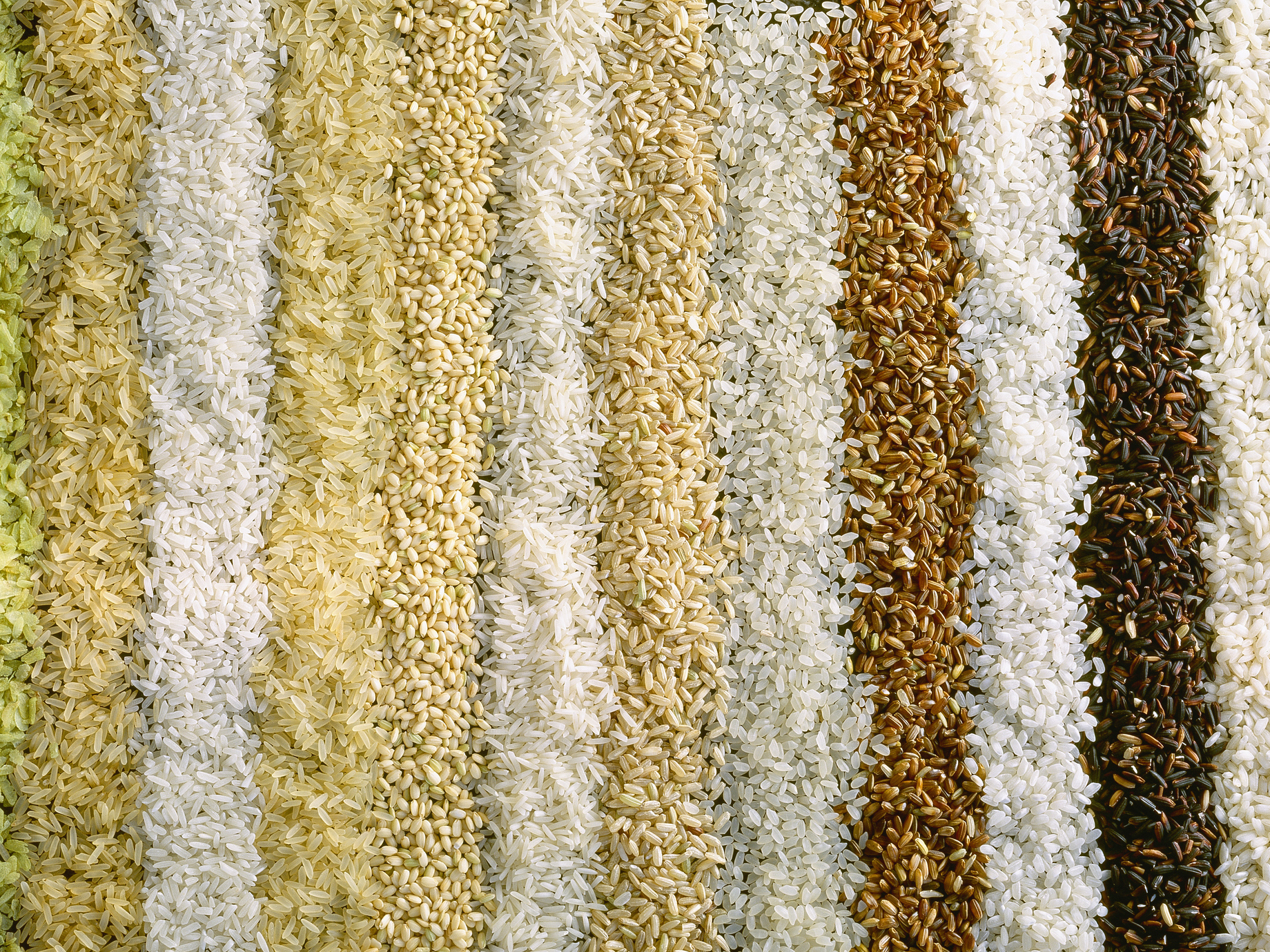 Rice will lose nutritional value as carbon dioxide levels rise