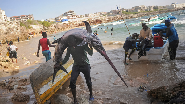 """A Somali fisherman carries a sailfish to the market near the port in Mogadishu. One of the U.N. Sustainable Development Goals calls for the world to """"conserve and sustainably use the oceans, seas and marine resources for sustainable development."""""""