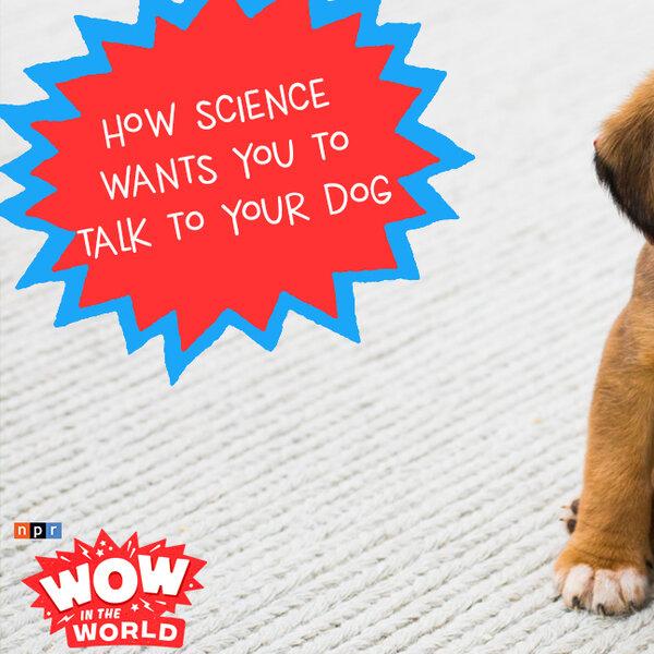 如何与狗交谈