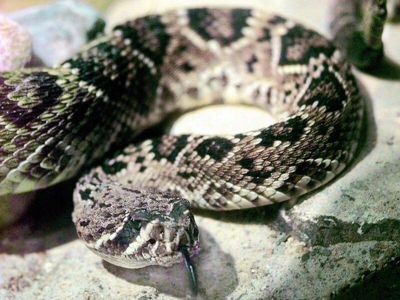 Man Kills Snake