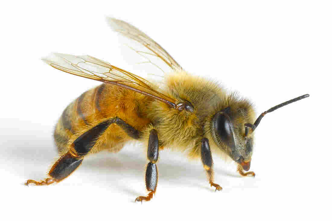 Bees understand the concept of zero