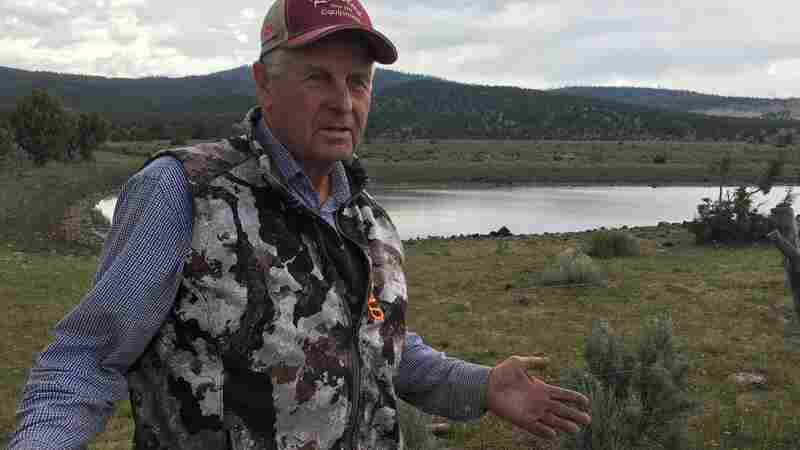 Deepening Drought In Western U.S. Costs Ranchers Money And Heartache