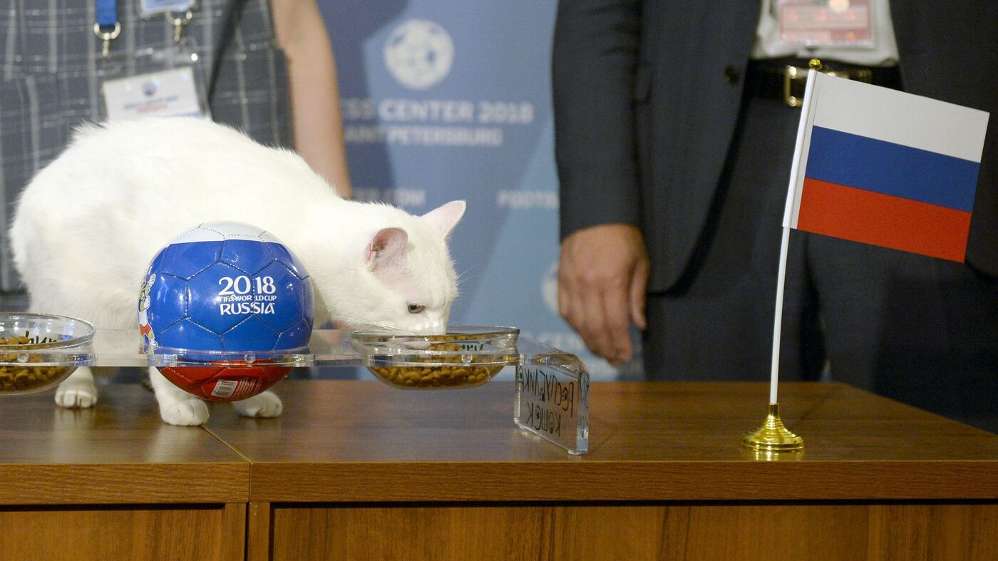Achilles The 'Psychic' Cat Predicts Russia Win In World Cup Opening Match