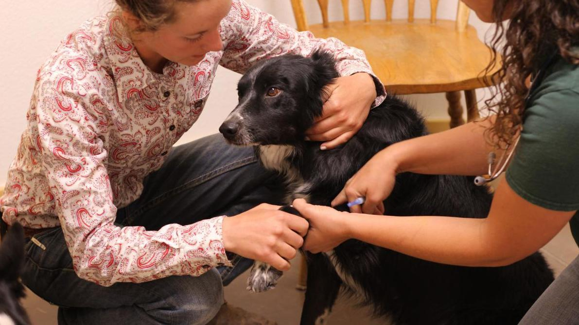 Shortage of rural veterinarians a growing problem in U S  | MPR News