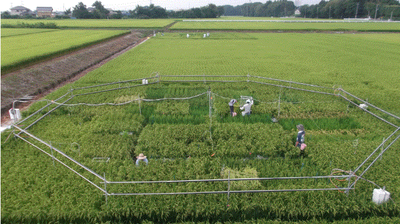 As Carbon Dioxide Levels Rise, Major Crops Are Losing Nutrients