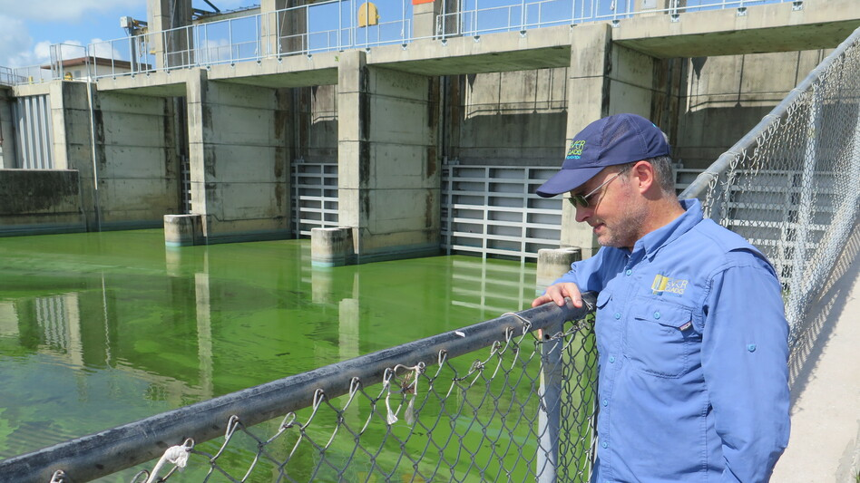 At this lock, which connects Lake Okeechobee with the St. Lucie River, everything is coated in green. Steve Davis, a senior ecologist with the Everglades Foundation, was surprised.