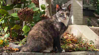 Washington, D.C., Is Counting All Its Cats. It Will Take 3 Years And $1.5 Million