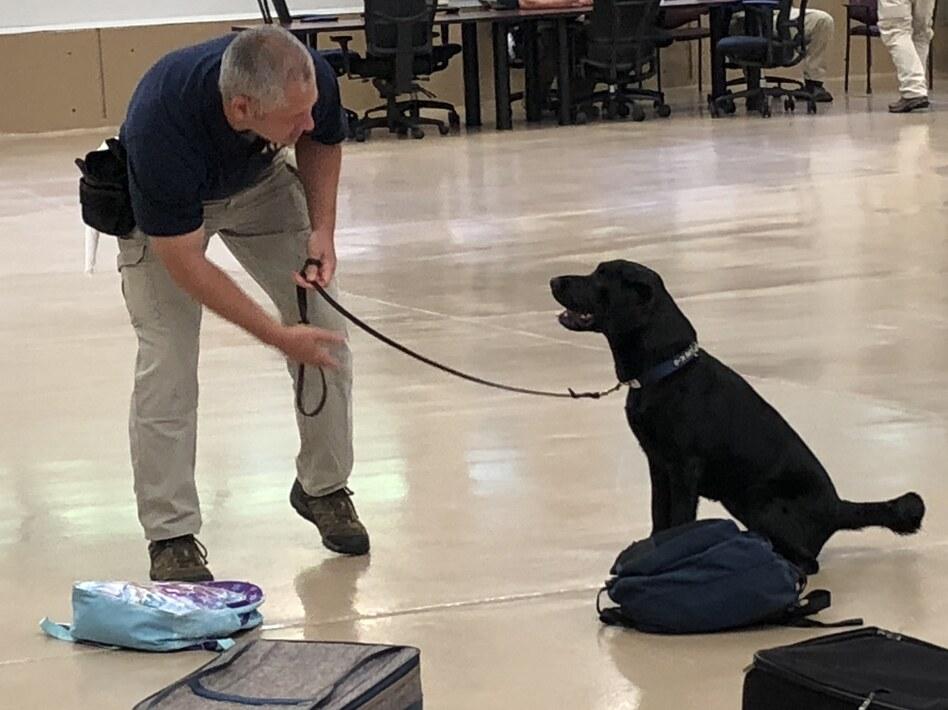 Dog Training Near Groveland Ca