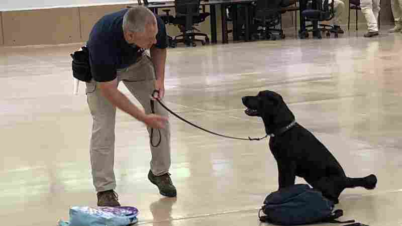 In Dog-Eat-Dog World Of Congress, 2 GOP Lawmakers Spar Over Canine Training Facility