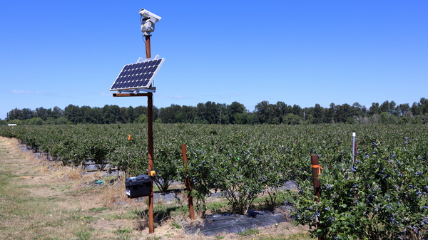 This laser unit is one of six that repel thieving birds from the blueberry fields of Meduri Farms near Jefferson, Ore.