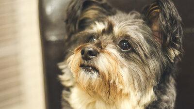 dogs : NPR