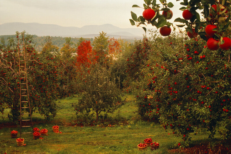 New technologies and a changing climate are altering the way apples are grown in places like New York