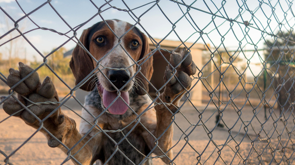 High-speed tracking dogs have been a game changer in the fight against rhino poaching in South Africa. Their success depends on their ability to work as a team, which means they sleep and eat in the pack-sized enclosures shown above.