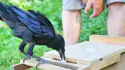 French Theme Park Asks: Crows Can Pick Up Trash, Why Can't You?