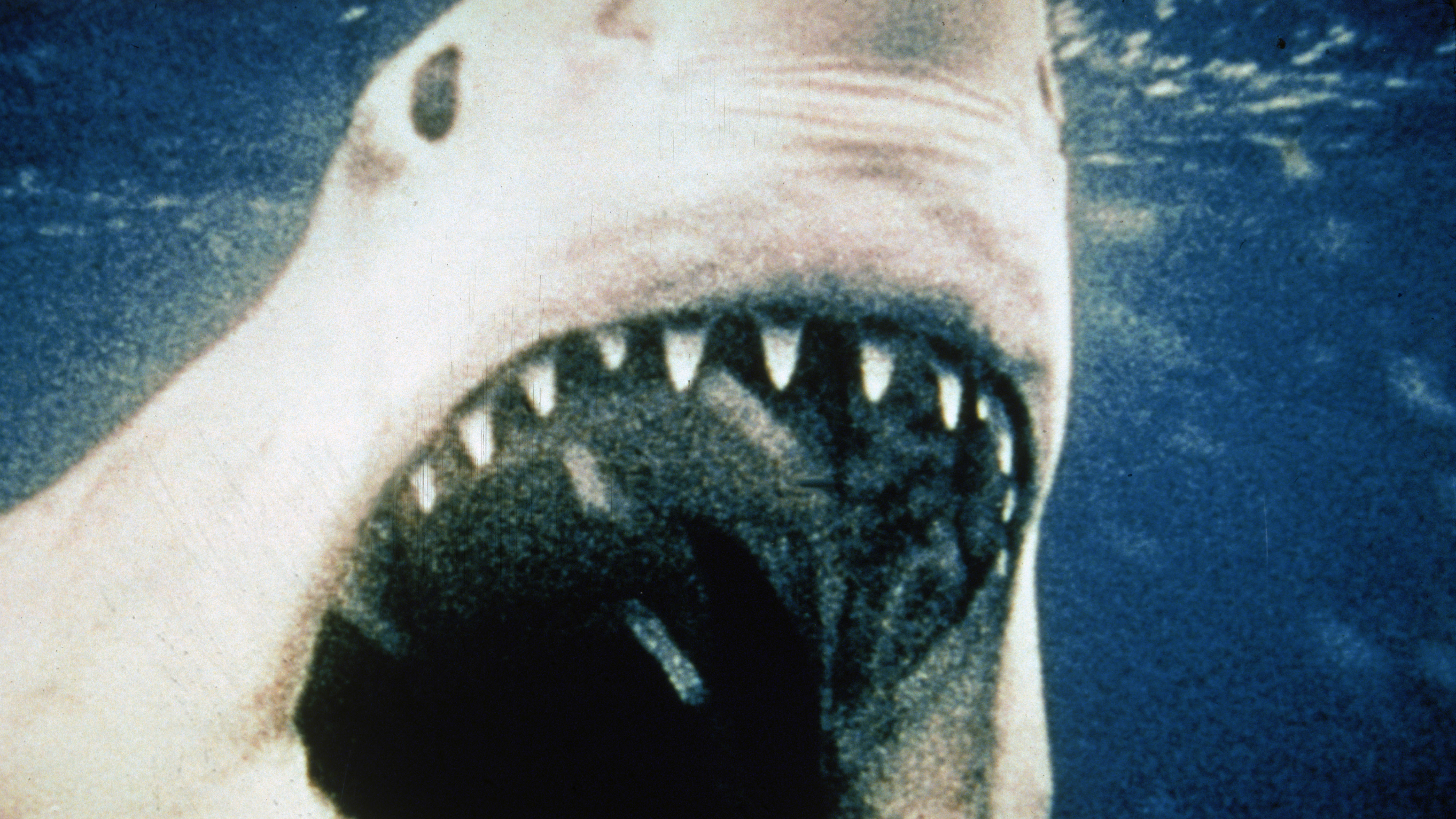 What No 'Jaws' Or: See The Movie Skip The Book