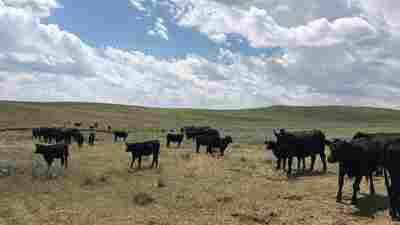 Where's The Beef? Wyoming Ranchers Bet On Blockchain To Track It