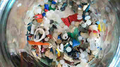 Beer, Drinking Water And Fish: Tiny Plastic Is Everywhere