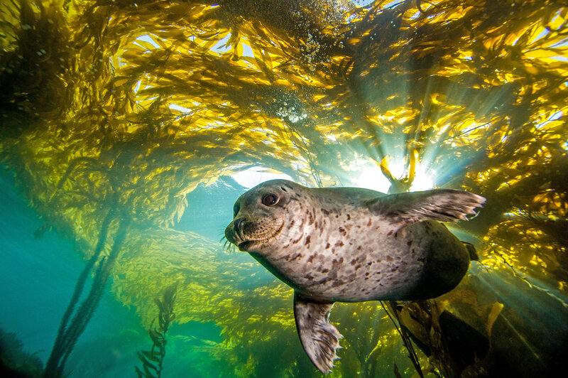 Scientists Turn To Harbor Seals To Help Improve Tracking Software : NPR