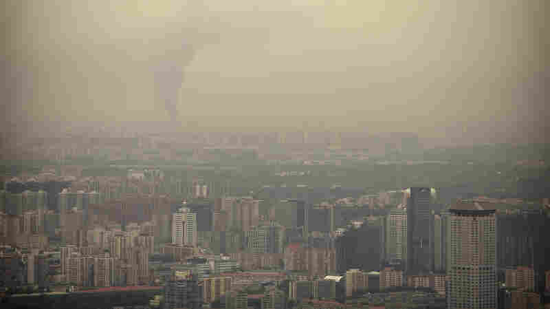 Air Pollution Exposure Harms Cognitive Performance, Study Finds