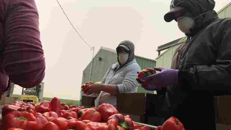 As Wildfires Rage, Smoke Chokes Out Farmworkers And Delays Some Crops
