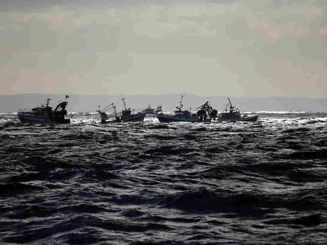 Scallop fishers plead for naval protection after Channel clash with French