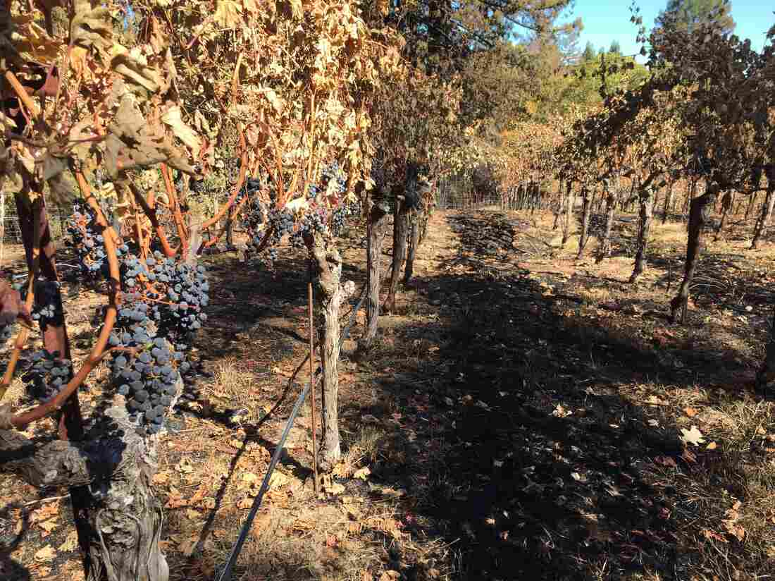California Wine Country Wildfires Spark Opportunity To Highlight Food Waste : The Salt : NPR