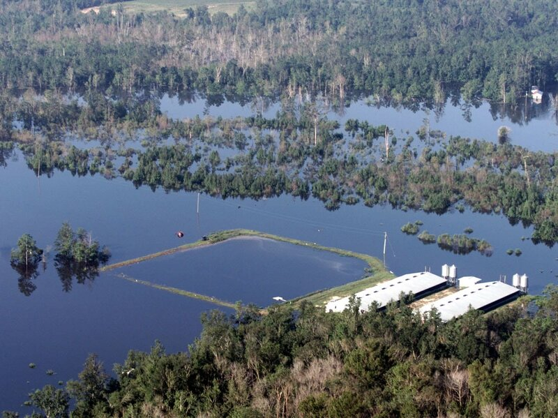 Hog Farm Waste Could Become Environmental Hazard After Hurricane