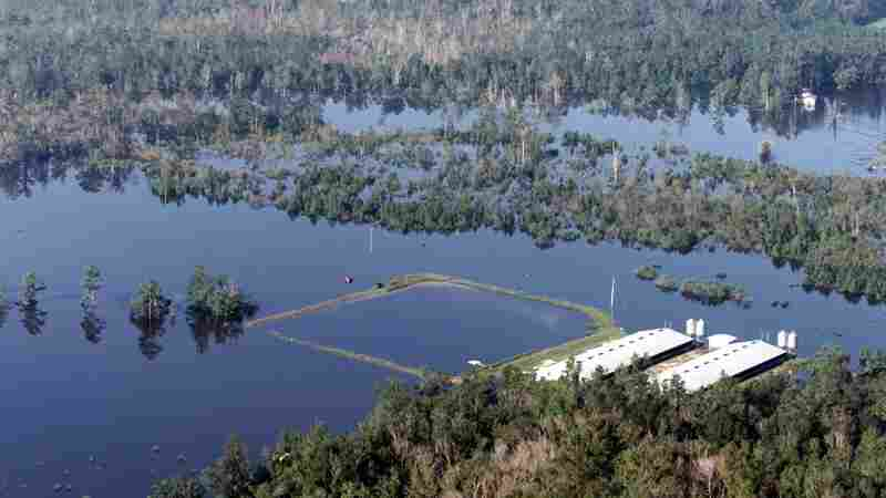 Hog Farmers Scramble to Drain Waste Pools Ahead Of Hurricane Florence