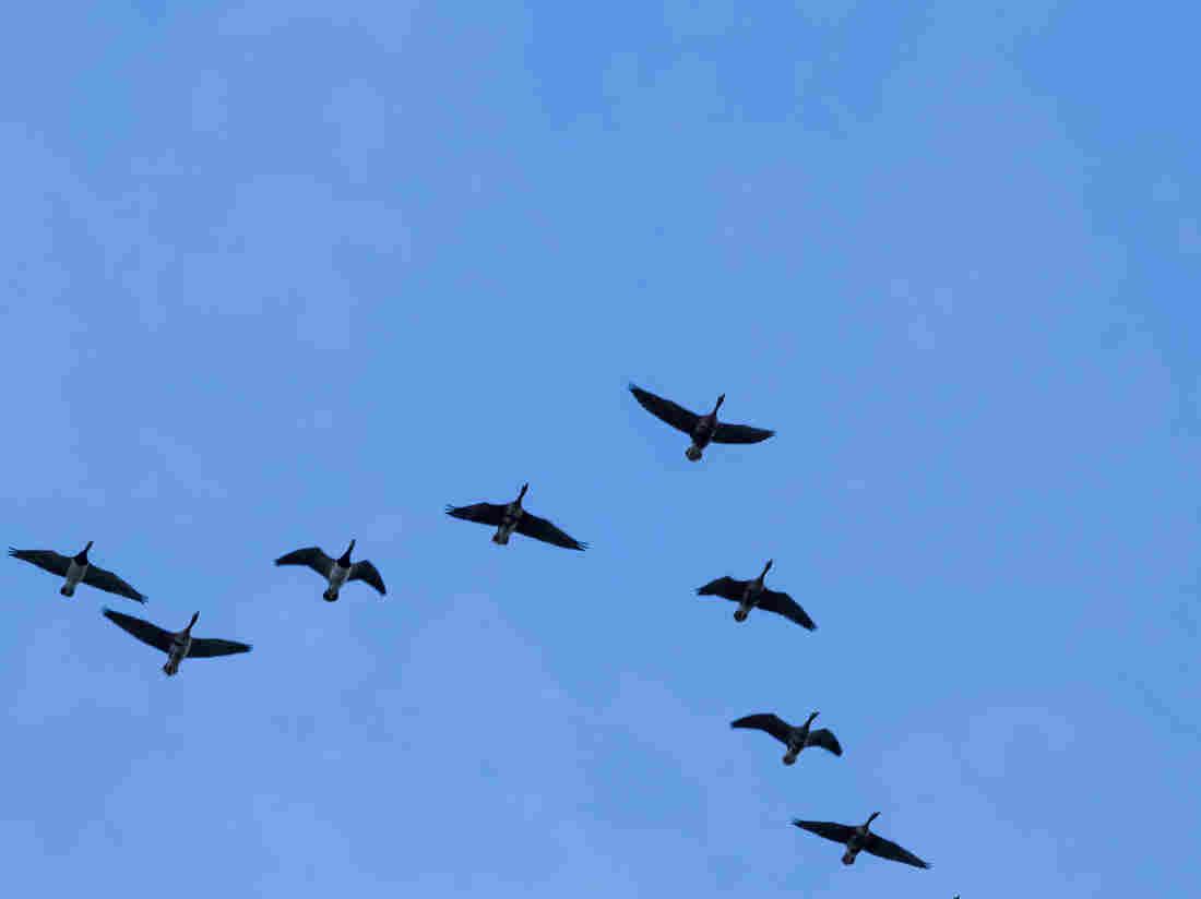 Bird Flight Patterns Unique Decorating