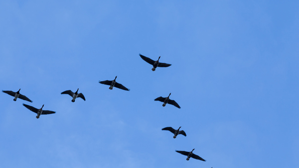 Migrating Birds Avoid Bad Weather — Which Makes Their Paths Predictable