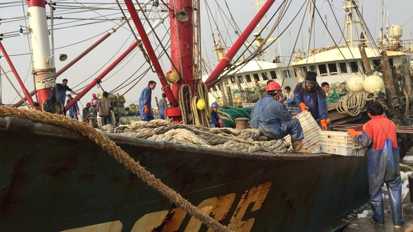 Large fishing boats use voluminous trawl nets, longlines miles in length, and other industrial gear to catch fish on the high seas, which can destroy habitats and kill other sea life.