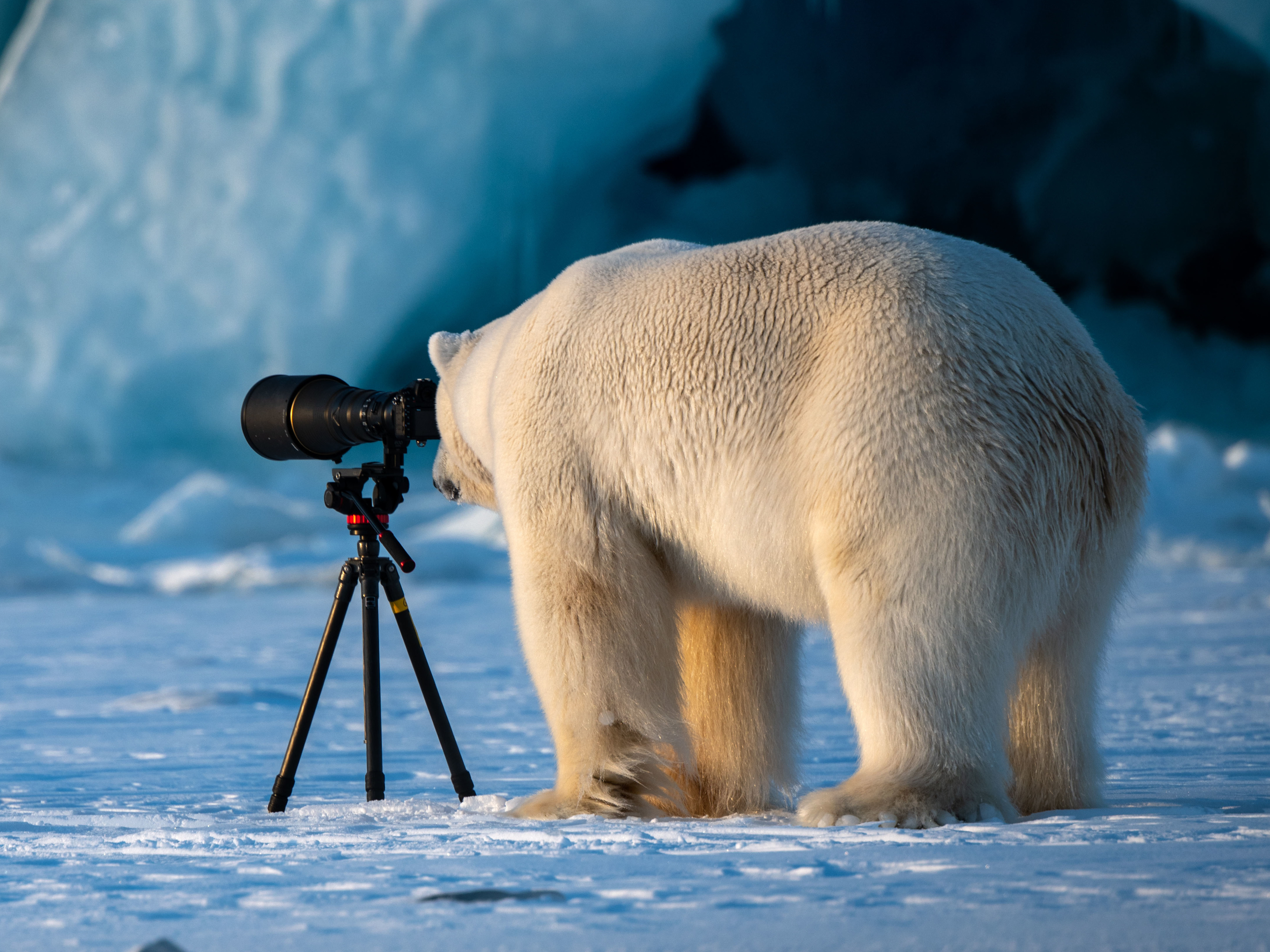Cant Bear More News Take A Break With Funny Wildlife Furtography