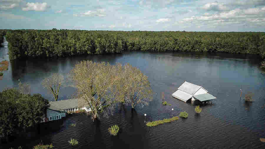 Florence Engulfs Hog Farms And Chicken Houses, Thrashing North Carolina Agriculture