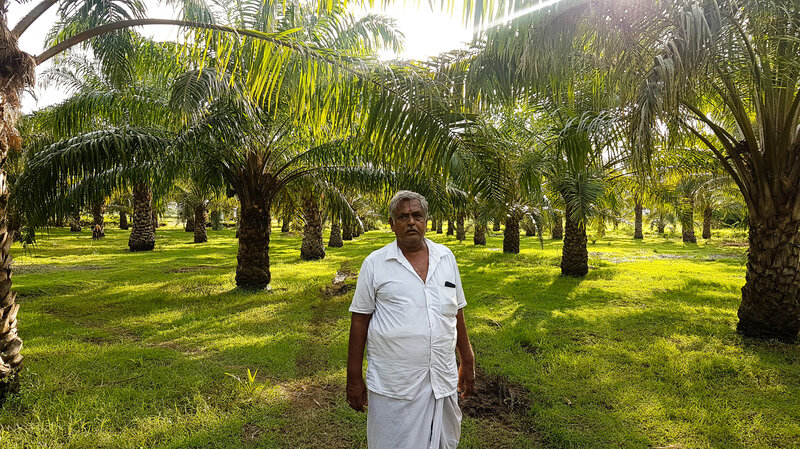 Amid Palm Oil Boycott India Wants To Produce More Of It