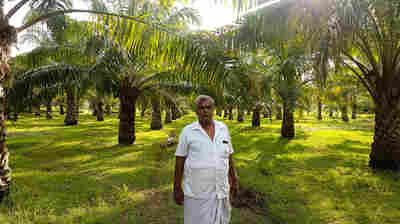 Amid Palm Oil Boycott, India Wants To Produce More Of It