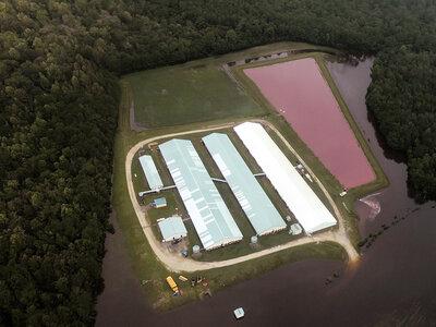 Overflowing Hog Lagoons Raise Environmental Concerns In North Carolina